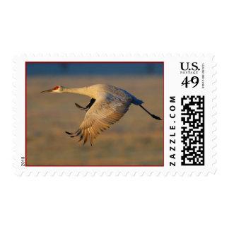 Crane Stamp
