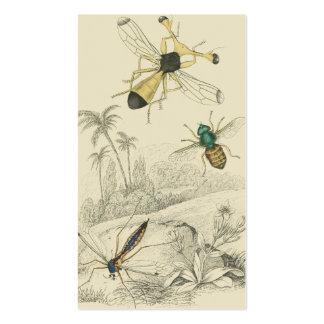 Cranefly mosca y mosca de Guinea Plantilla De Tarjeta De Visita