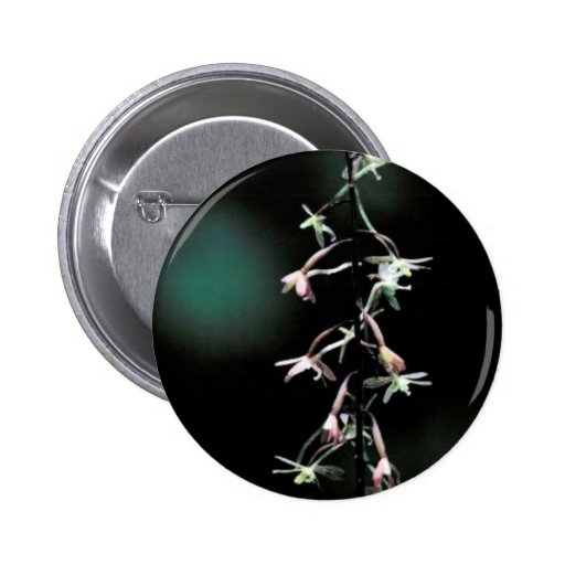 Cranefly orchid 2 inch round button
