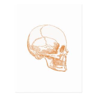 cráneo anaranjado tarjeta postal