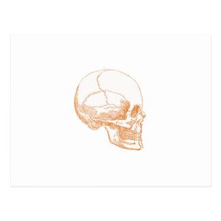 cráneo anaranjado tarjetas postales