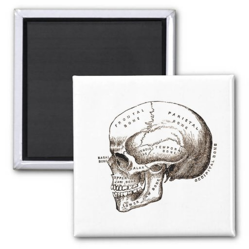 Cráneo anatómico de la anatomía antigua imán cuadrado