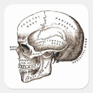 Cráneo anatómico de la anatomía antigua pegatina cuadrada
