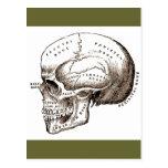 Cráneo anatómico de la anatomía antigua postales