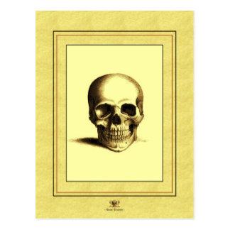 Cráneo antiguo tarjeta postal