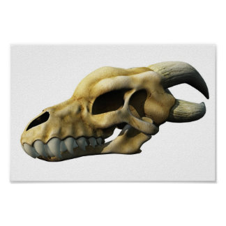 Cráneo de cuernos del dragón poster