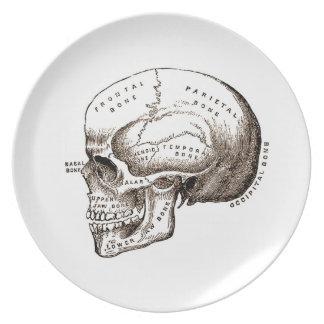 cráneo de la anatomía plato