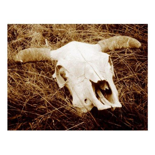 Cráneo de la vaca en Wyoming rural