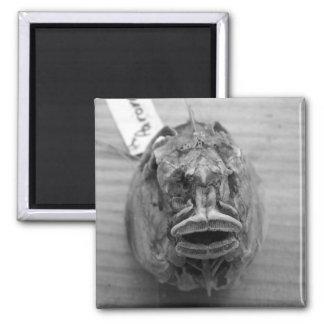 Cráneo de los pescados de Parore Imán Cuadrado