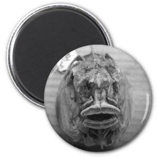 Cráneo de los pescados de Parore Imán Redondo 5 Cm