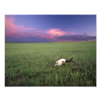 Cráneo del búfalo en hierba de pradera cerca de Me Fotografía