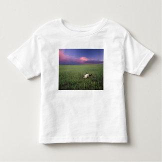Cráneo del búfalo en hierba de pradera cerca de t shirt