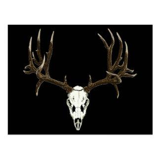 Cráneo del ciervo mula tarjeta postal
