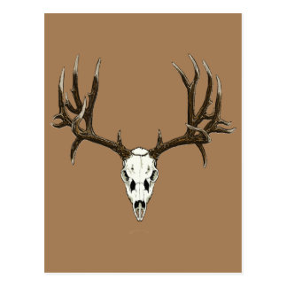 Cráneo del ciervo mula postal