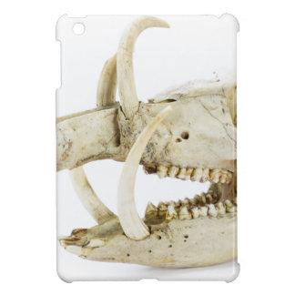 Cráneo del jabalí