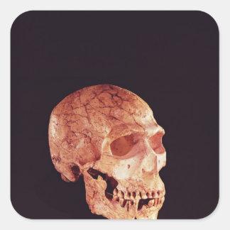 Cráneo del Neanderthal, descubierto en Mt Carmel Pegatina Cuadrada