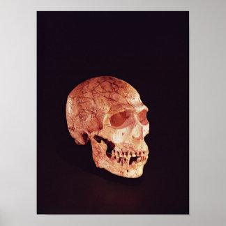 Cráneo del Neanderthal, descubierto en Mt Carmel Póster