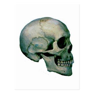 Cráneo del perfil postal