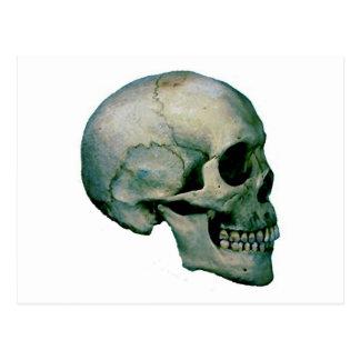 Cráneo del perfil postales