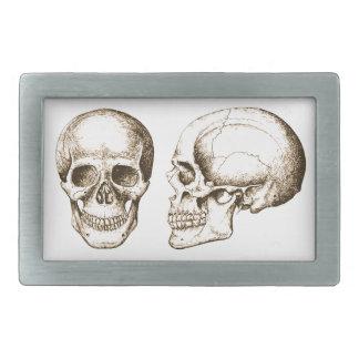 Cráneo del ser humano de la parte delantera de la hebillas cinturon rectangulares
