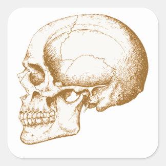 Cráneo del ser humano de la sepia pegatina cuadrada