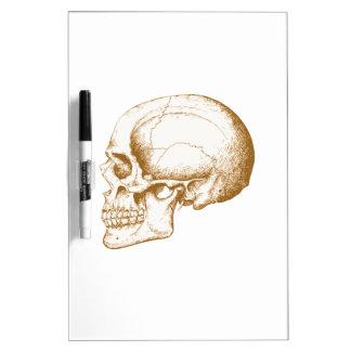 Cráneo del ser humano de la sepia pizarra blanca