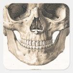 Cráneo grande, pequeño cráneo etiquetas