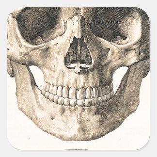 Cráneo grande, pequeño cráneo pegatina cuadrada