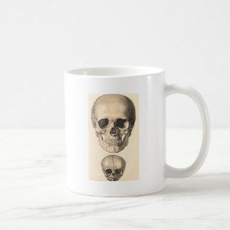 Cráneo grande, pequeño cráneo taza de café