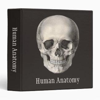 """Cráneo humano de la anatomía del vintage, carpeta 1 1/2"""""""