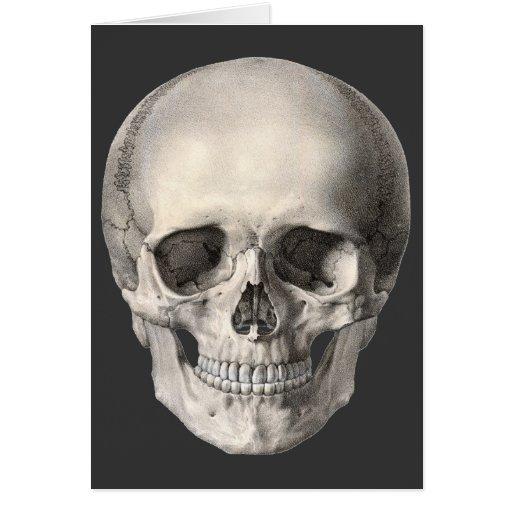 Cráneo humano de la anatomía del vintage, esquelet tarjetas