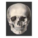 Cráneo humano de la anatomía del vintage, esquelet tarjeta postal