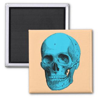 Cráneo humano de la anatomía imán cuadrado