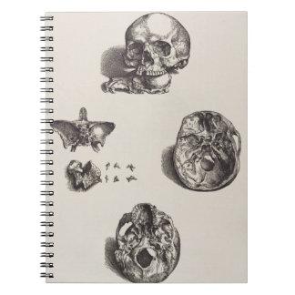 Cráneo - Icones Anatomicae Spiral Notebooks