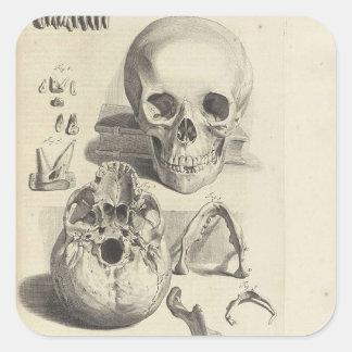 Cráneo Etiquetas