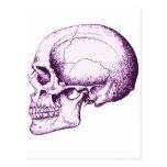 Cráneo Postales
