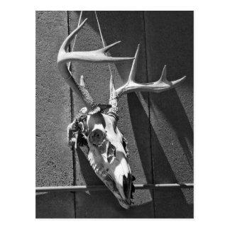 Cráneo y astas de los ciervos en blanco y negro postales