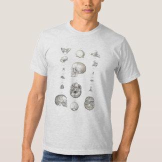 Cráneo y camiseta de la anatomía de los huesos playeras