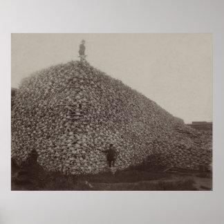 Cráneos del bisonte americano que se molerán para  poster