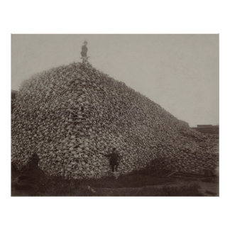 Cráneos del bisonte americano que se molerán para  póster