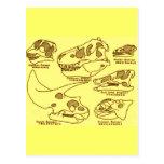 Cráneos del dinosaurio postales