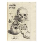 Cráneos del vintage postal