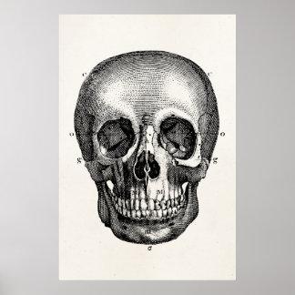 Cráneos retros del cráneo de los 1800s del vintage impresiones