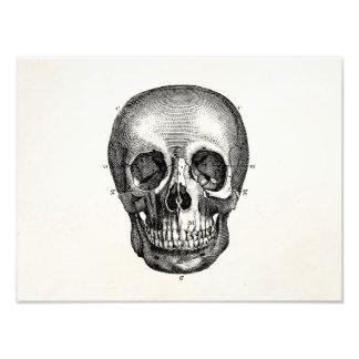 Cráneos retros del cráneo de los 1800s del vintage cojinete