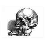 Cráneos, ser humano y animal postal