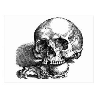 Cráneos, ser humano y animal tarjeta postal