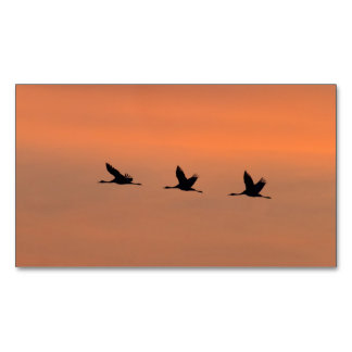 Cranes at sunrise magnetic business card