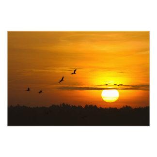 Cranes at sunrise art photo