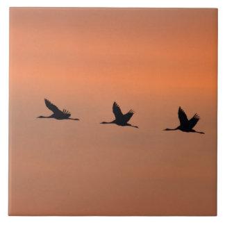 Cranes at sunrise tile