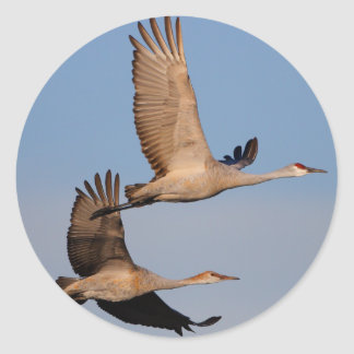 cranes classic round sticker